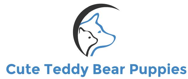 Teddy Bear Puppies & Dogs